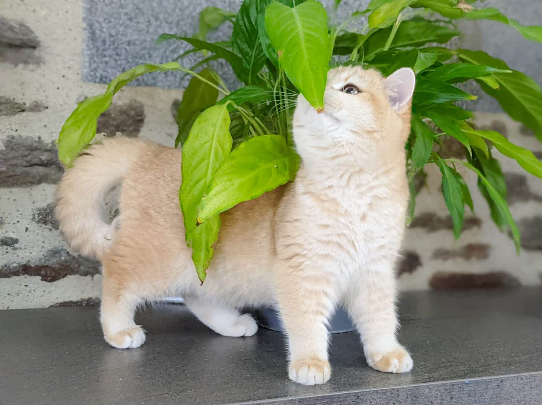 Pandora sent une plante