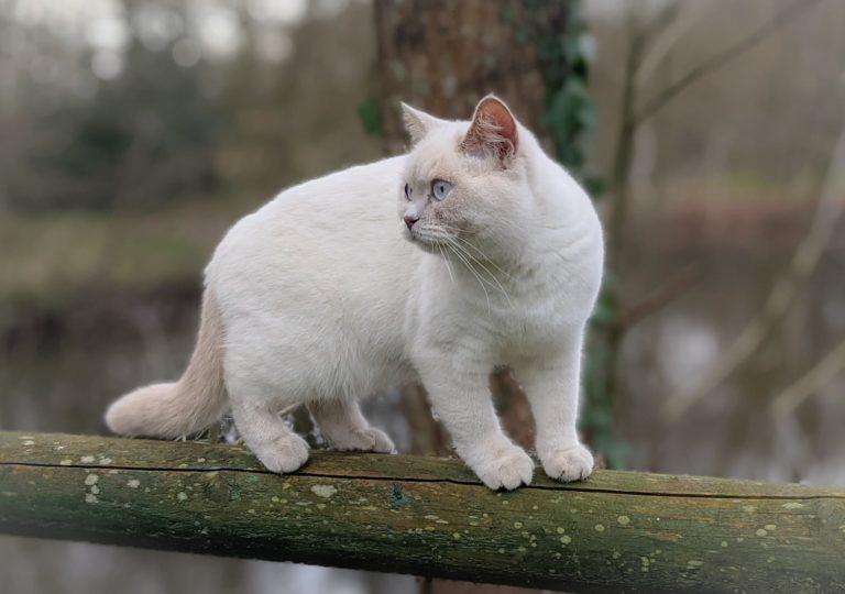 Pearl sur la barrière de l'étang