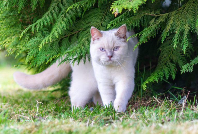 Pearl au pied de son arbre