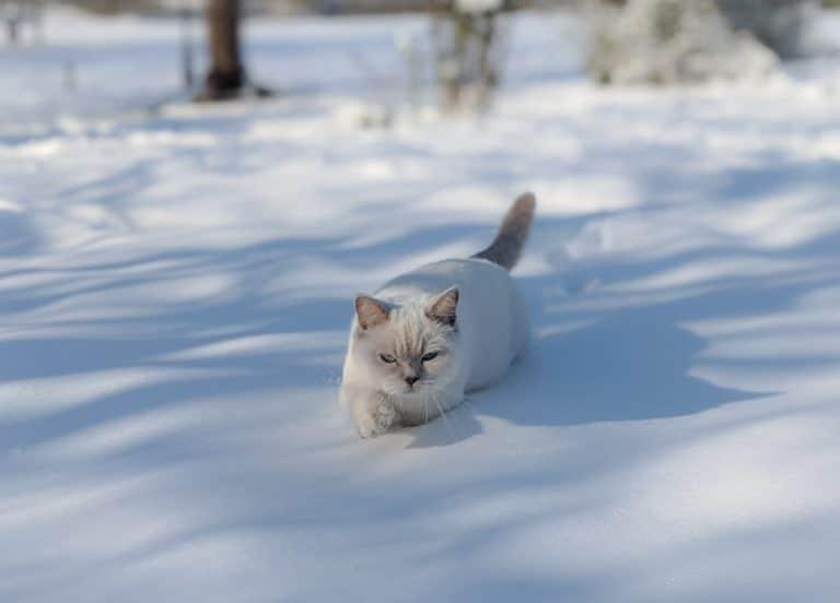 Pearl dans la neige - hiver 2021