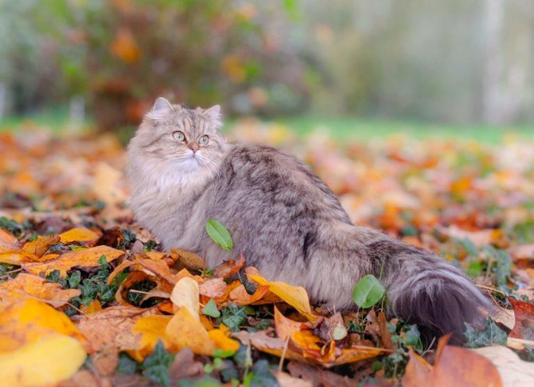R'mione dans les feuilles d'automne